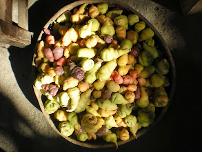 Photo: Oku, Uyoku, and Mashua: just three of the thousands of types of papas we don´t have in the States.