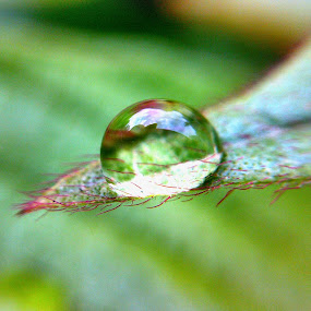 just because.. by Rayna Brilliantsyah - Nature Up Close Natural Waterdrops