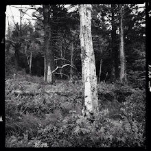 Photo: These Woods South Bend, WA  with iPhone 5 #hipstamatic #blackandwhite