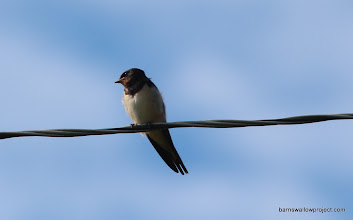 Photo: Fledgling on a wire