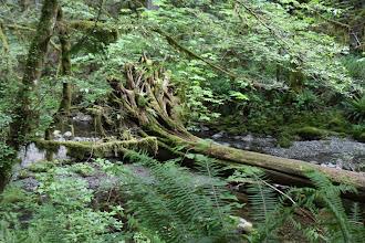 Photo: Goldstream Provincial Park