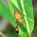 Scorpionfly (female)