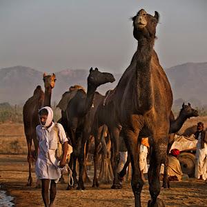 Pushkar_0388.jpg