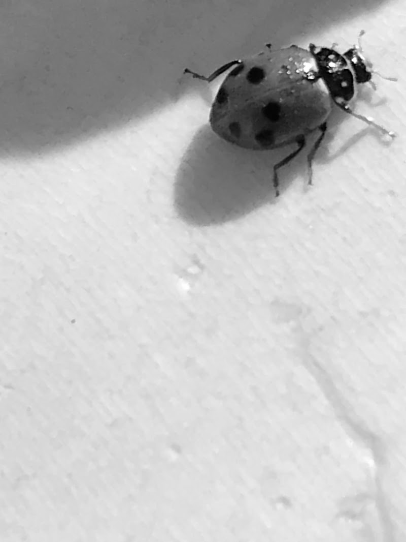 Lady Bug di Cristia
