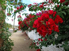 Photo: sidewalk flowers in Todos Santos