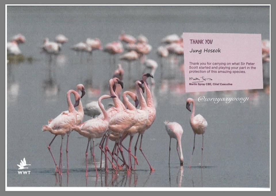 FlamingoMessage
