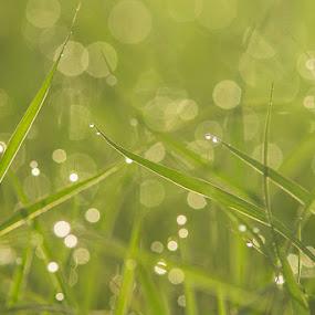 Dew by Rusman Budi Prasetyo - Landscapes Weather (  )