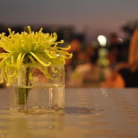 by Julian Castoreno - Nature Up Close Flowers - 2011-2013