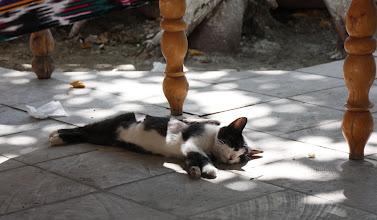 Photo: Day 163 - Cat