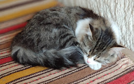 В Каппадокию стоит ехать хотя бы из-за котиков!