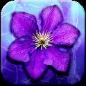 Purple Flowers Live Wallpaper icon
