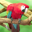 Amazing Parrots Wallpapers icon
