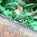 Neriidae