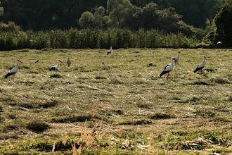 Photo: Cigognes (Delta de la Sauer)