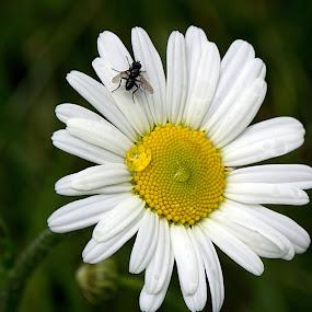 by Helena Jirasová - Flowers Flowers in the Wild