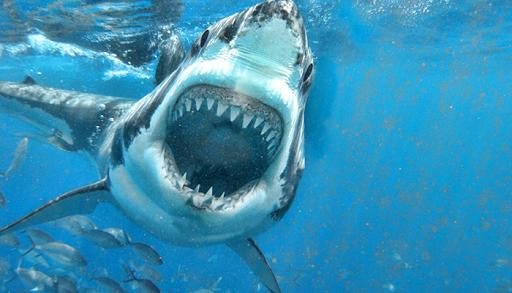 Shark Bite Attack  screenshots 1