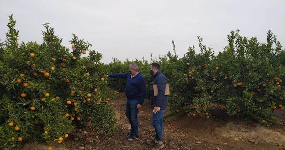 Un murciano se convierte en el primer productor de cítricos de Almería