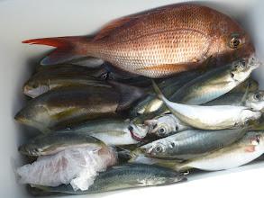 Photo: 佐賀のイノウエさんの釣果です。 イサキ、アジ、真鯛・・・