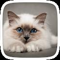 Cat Eye Blue Theme icon