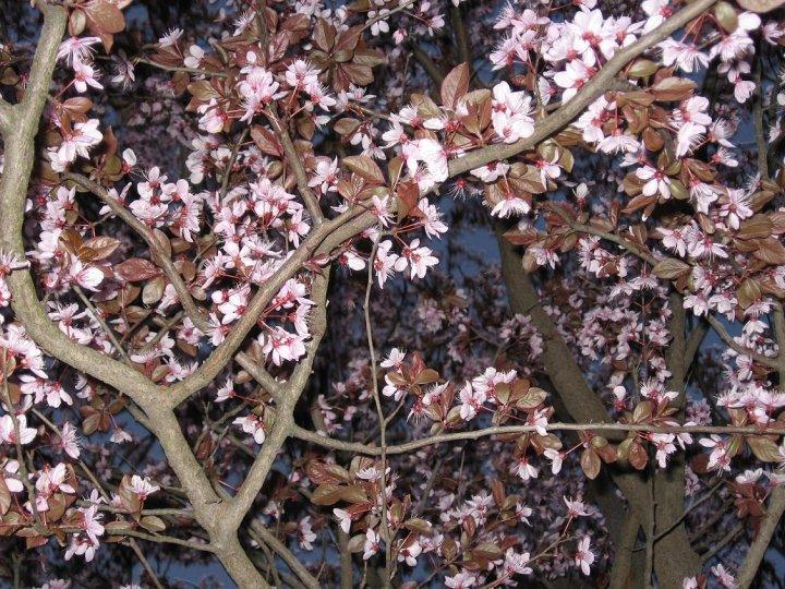 Fiori rosa fiori di... di Alkye