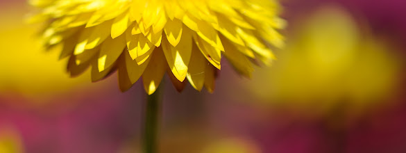 Photo: this one's for you ...  #floralfriday curated by +Tamara Pruessner #flowerphotography #sydcbdphotowalks