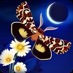 Flutter: Starlight 1.51 (340) (Armeabi-v7a)