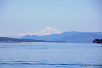 Photo: (Year 2) Day 331 - Mount Baker (USA) Viewed from Sidney BC