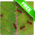 Red ants free live wallpaper icon