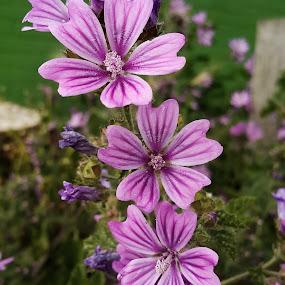 Cor by Claudio de Freitas Photography - Flowers Flower Gardens ( mobilography, london, mobile photos, claudidefreitasphotography, flower, photooftheday,  )