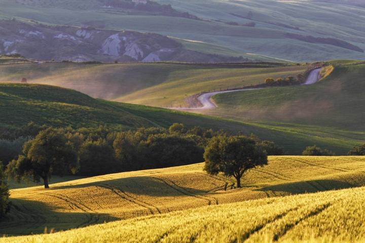 Il campo di grano di Damiano