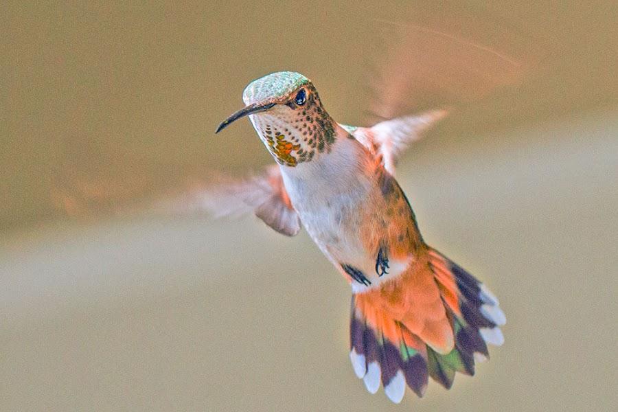 by Johannes Bichmann - Animals Birds