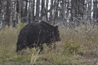 Photo: Our first greeter at Yellowstone