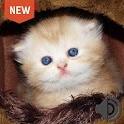 Sons para filhotes de gatos icon