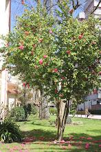 Photo: Camelio  Especie Reticulata