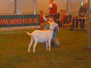 Photo: Rubriek 1: witte lammeren geboren tussen 23-4 en 25-4-2012. 1a. Alba's Mariola 11.