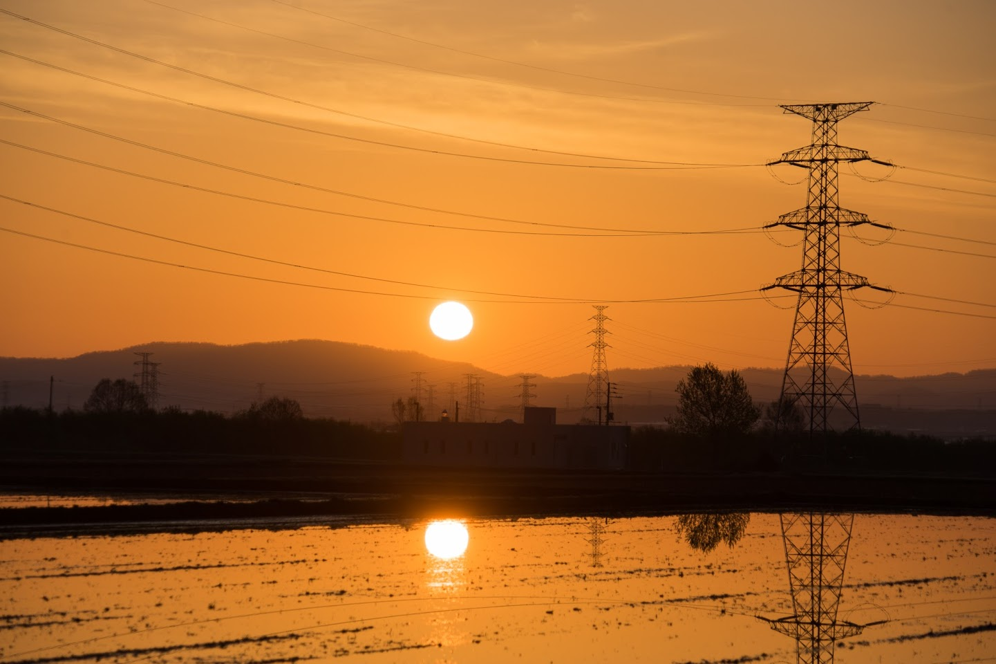 田んぼに写り込んだ朝陽