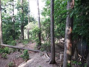 970mピークは伐採林