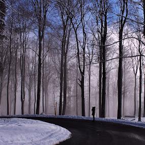 Light Hunter by Jadranka Bužimkić - Landscapes Forests ( hunting the light )
