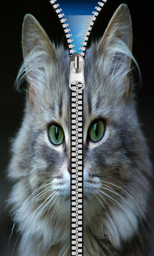 Cat Zipper Screen