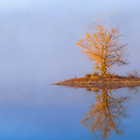 Tree with reflection by Qing Zhu - Landscapes Waterscapes ( water, reflection, single, lake, lone, foggy, one tree, solo, nature, season, tree, autumn, foliage, fall, lonely, misty, mist )