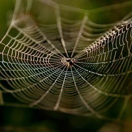 *** by Katka Kozáková - Nature Up Close Webs ( spider web,  )