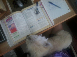 Photo: My dog wanted to help me with my homework.