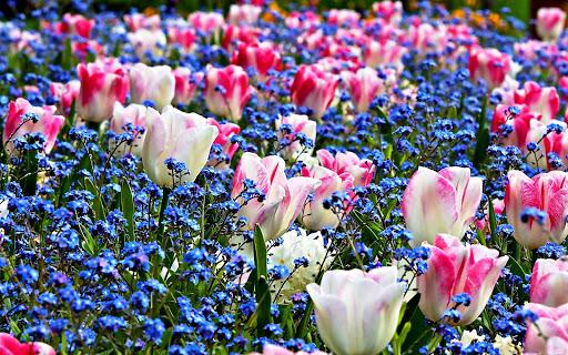 그림 맞추기 - 다채로운 사진