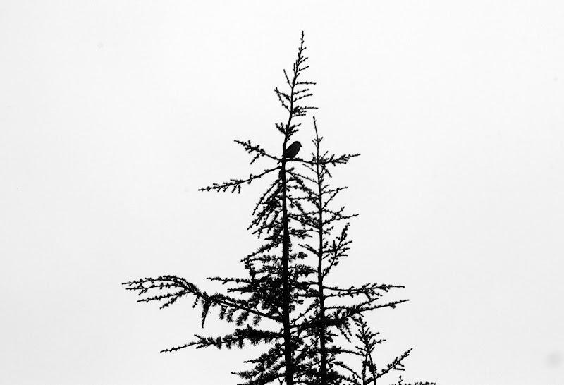 Passero solitario.. di PhotoBySaraPesucci