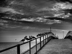 Photo: Gulls Along Rocky River, Ohio Pier