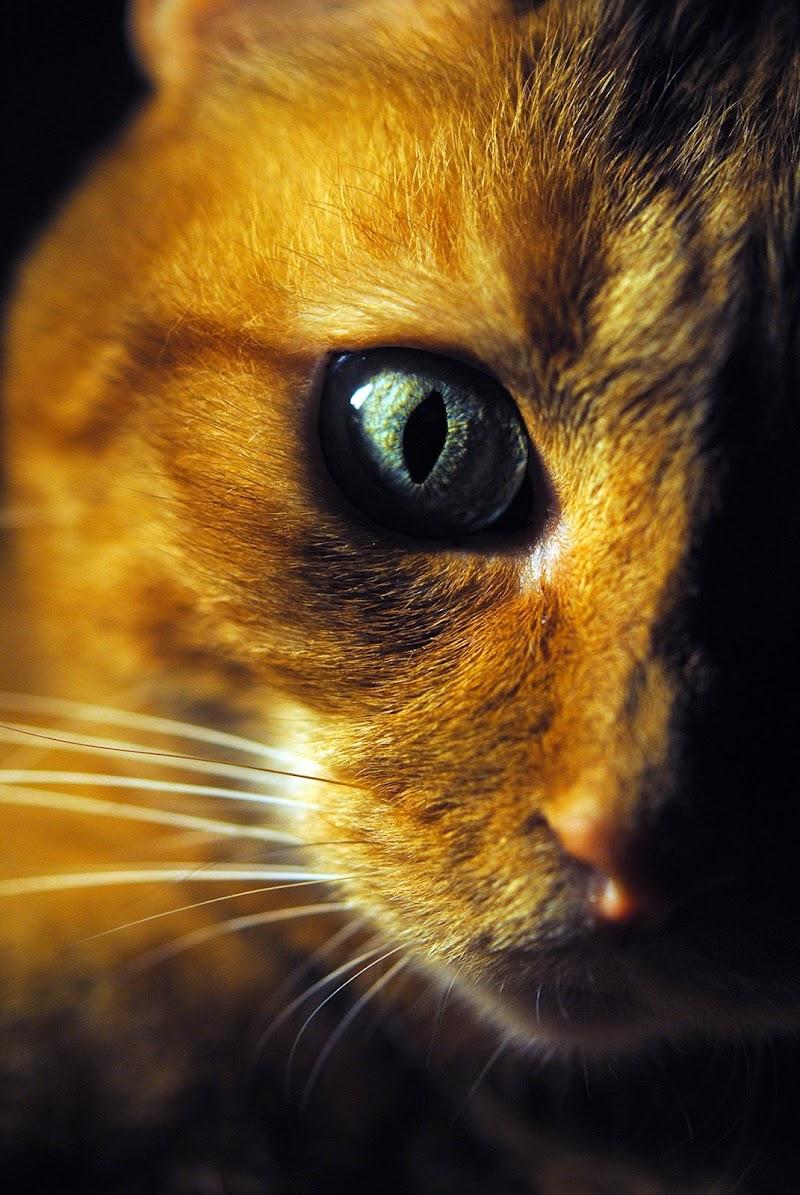 Sguardo felino di Riccardo Ippoliti