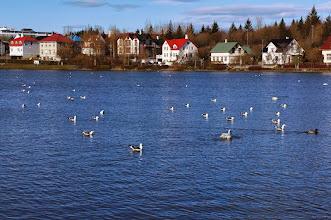 """Photo: Lake Tjörnin (""""The Pond"""") in Reykjavík"""