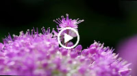 Tâm Sự Nàng Xuân – Như Quỳnh