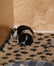 Photo: so - das ist 'der Ellie ihre Höhle' :)