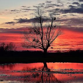 Sunset in Lonjsko polje,Croatia by Valentina Masten - Landscapes Sunsets & Sunrises (  )
